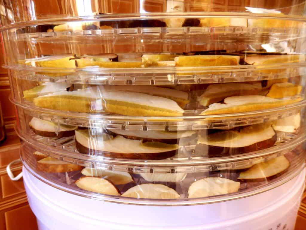 How to Choose a Food Dehydrator in Canada